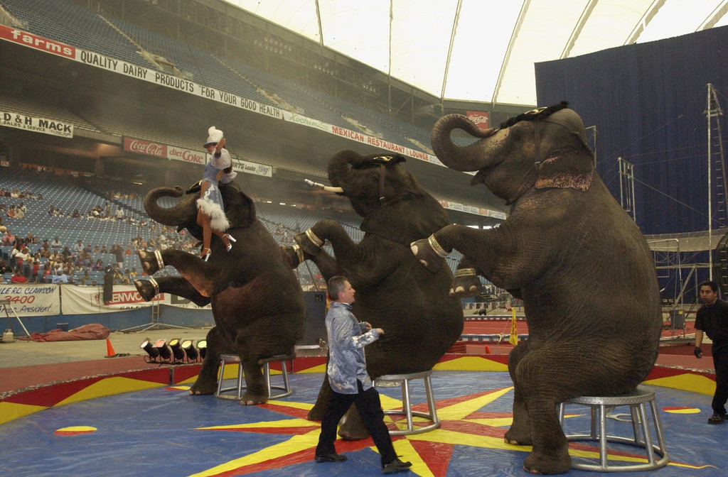Description of . One of the many elephant acts at the Schrine Circus Xtream at the Pontiac Silverdome.