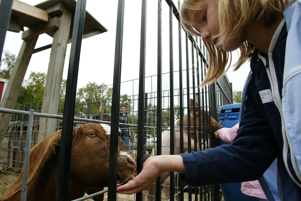 Description of . Lindsey Surmann, 8, of Milford feeds a goat named Willy while visiting Yates Cider Mill in Rochester Hills. Photographed Friday, October 3, 2003.