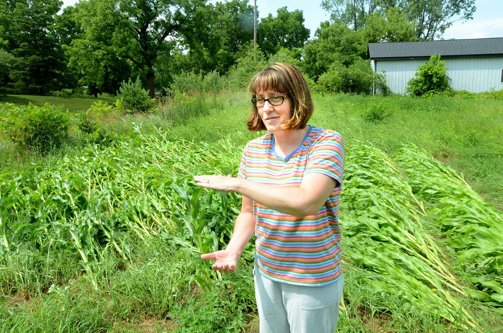Description of . Tami Mapiatt near her corn field that was leveled during storms on Tuesday. The storms not down a power line near her home on Seymour Lake Road east of Sashabaw in Brandon Township.    Tuesday, July 23, 2013.  The Oakland Press/TIM THOMPSON