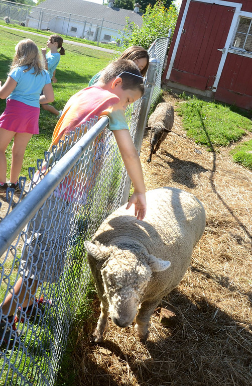 Description of . Zane Grant, 9, reaches for a sheep  during Farm Camp at Hess-Hathaway Park in Waterford Township.   Thursday, July 25, 2013.  The Oakland Press/TIM THOMPSON