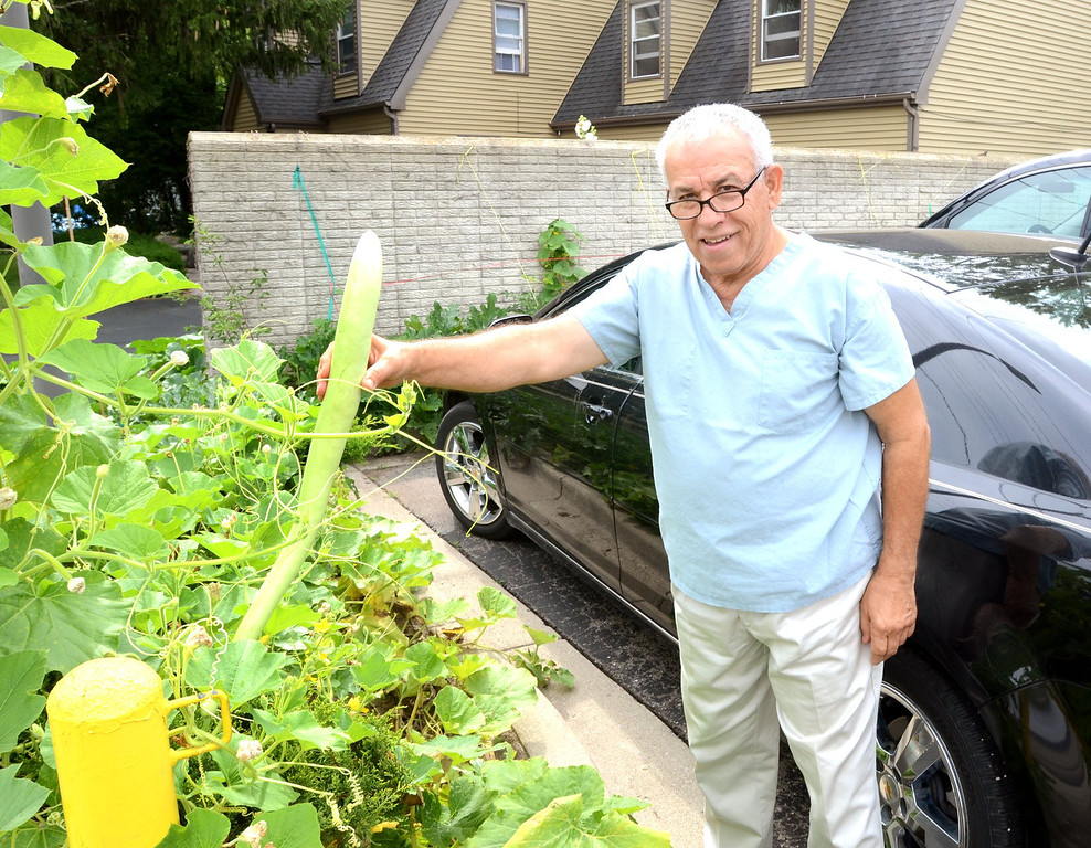Description of . Dr. Ahmad Hadied with a zucchini that he is growing all along the outside of his office at Keego Urgent Care in Keego Harbor.    Monday, July 22, 2013.  The Oakland Press/TIM THOMPSON