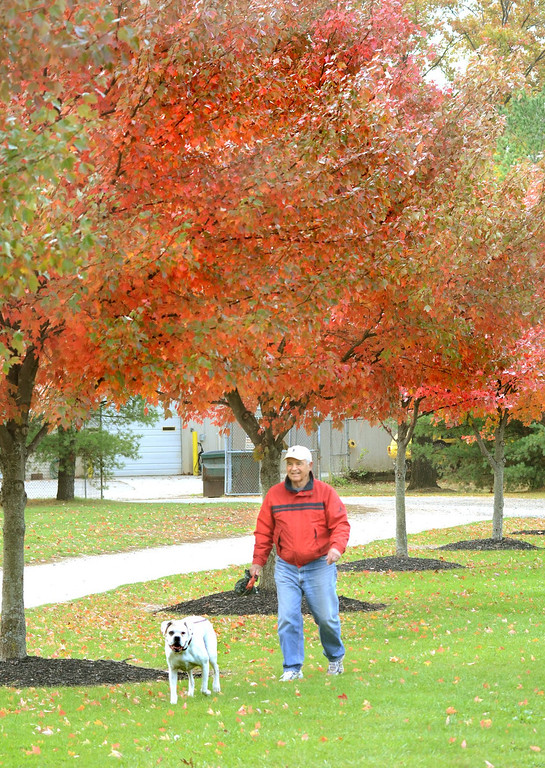 Description of . Bob Sack of Waterford, walks his dog Patch under the colorfull trees at Waterford Oaks County Park.    Tuesday, October 22, 2013.  The Oakland Press/TIM THOMPSON