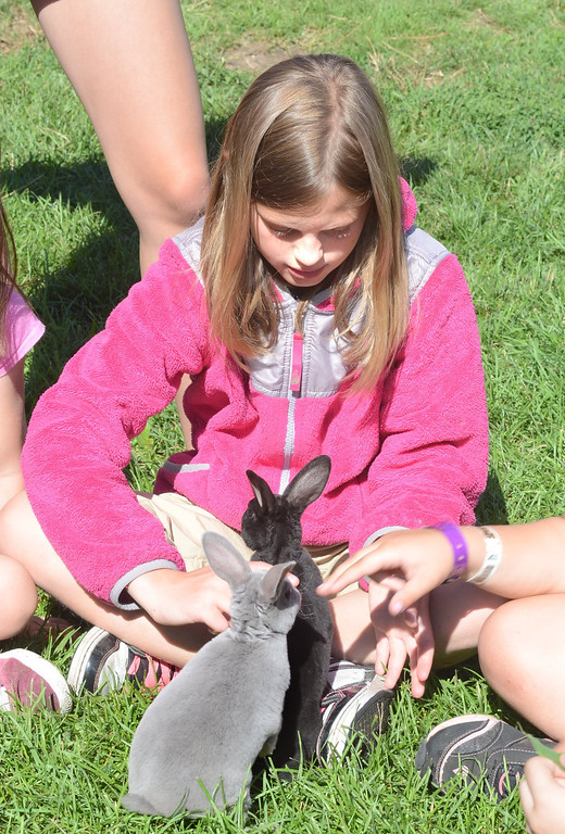 Description of . Grace Liotino, 9, pets a couple of bunnies during Farm Camp at Hess-Hathaway Park in Waterford Township.   Thursday, July 25, 2013.  The Oakland Press/TIM THOMPSON