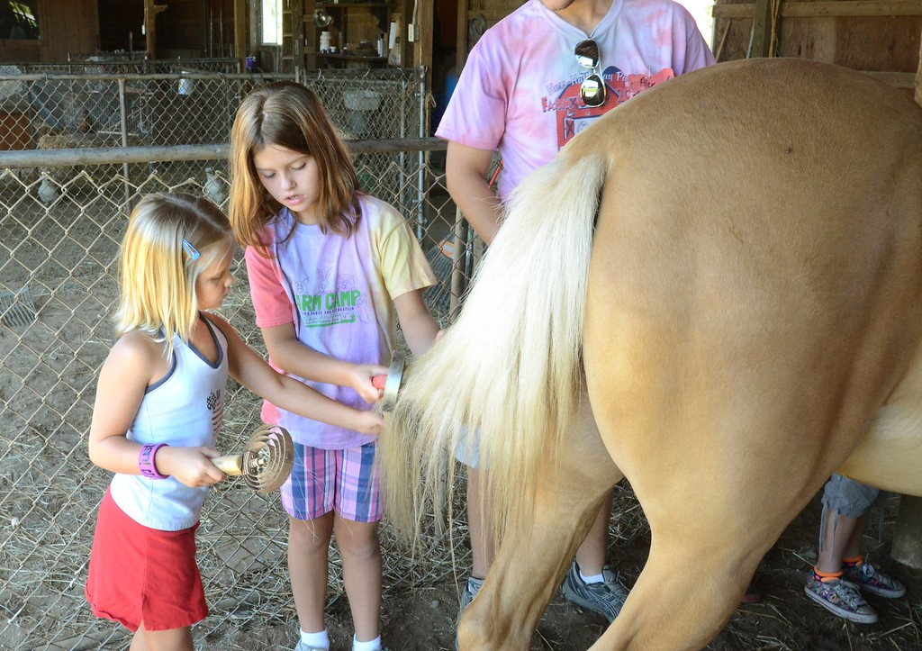 . Rachel Morgan, 7, left, and Emma Renusch, 8, comb the tail of a horse during Farm Camp at Hess-Hathaway Park in Waterford Township.   Thursday, July 25, 2013.  The Oakland Press/TIM THOMPSON